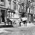 Ash Cart New York City 1896 by Unknown