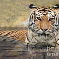 Asian Tiger  by Anek Suwannaphoom