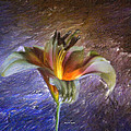 Asiatic Lily by Angela Stanton