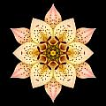 Asiatic Lily Flower Mandala by David J Bookbinder