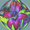 Asiatic Lily  by G Berry