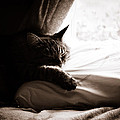 Asleep At Last by Emily Wickerham
