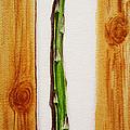Asparagus Tasty Botanical Study by Irina Sztukowski