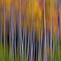 Aspen Abstract by Hansrico Photography