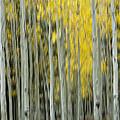 Aspen Abstract  by Saija  Lehtonen