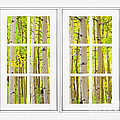 Aspen Forest White Picture Window Frame View by James BO  Insogna