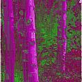 Aspen Grove 4 by Tim Allen
