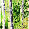 Aspen Grove 6 by Tim Allen