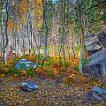 Aspen Grove by Jim Thompson