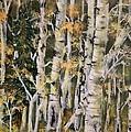 Aspen Hollow by Robert Wright