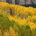 Aspen In Autumn At Silver Jack Reservoir by Jetson Nguyen