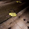 Aspen Leaf by Craig Forhan