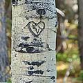 Aspen Love by Margaret Bobb