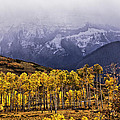 Aspen near the Snow-Capped Mountains