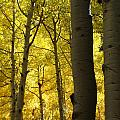 Aspen Of Arizona by Jeri lyn Chevalier