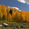 Aspen On The Road To Telluride Dsc07397 by Greg Kluempers