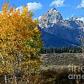 Aspen Peaks by Deanna Cagle