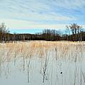 Aspen Prairie 2 by Mark Hudon