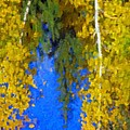 Aspen Reflection by Pat Now