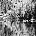 Aspen Reflections - Black And White by Harold Rau