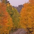 Aspen Road by Tonya Hance