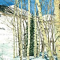 Aspen Shelter by Barbara Jewell