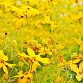 Aspen Sunflower by Janice Pariza
