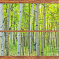 Aspen Tree Forest Autumn Picture Window Frame View  by James BO Insogna