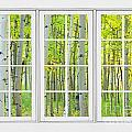 Aspen Tree Forest Autumn Time White Window View  by James BO  Insogna