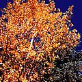 Aspen Tree by Glenn Aker