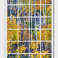 Aspen Tree Magic Cottonwood Pass White Window Portrait View by James BO  Insogna