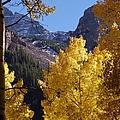 Aspen Viewing by Tonya Hance
