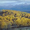 Aspens And The Tetons by Ed  Cooper Photography