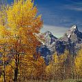 1m9353-aspens In Autumn And The Teton Range - V by Ed  Cooper Photography