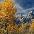 1m9352-aspens In Autumn And The Teton Range by Ed  Cooper Photography