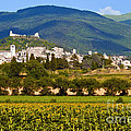 Assisi From The Sunflower Fields by Bob Phillips