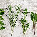 Assorted Fresh Herbs by Nailia Schwarz