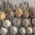 Assorted Grains And Flour by Science Photo Library