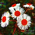 Asters Bright And Bold by RC DeWinter