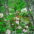 Asticou Azalea Garden by Edward Fielding