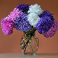 Astonishing Asters. by Terence Davis