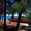 At Dog's Beach In Key West by Susanne Van Hulst