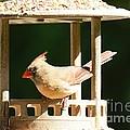 At My Birdfeeder by Cindy Manero