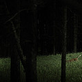 At Play In Darkened Woods by Shane Holsclaw