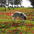 At Ruchama Forest Israel 1 by Dubi Roman