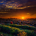 At The Break by Phil Koch