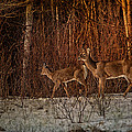 At The Edge Of The Woods by Susan Capuano