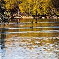 At The Lake-34 by David Fabian