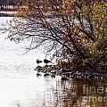 At The Lake-38 by David Fabian