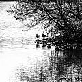 At The Lake-39 by David Fabian